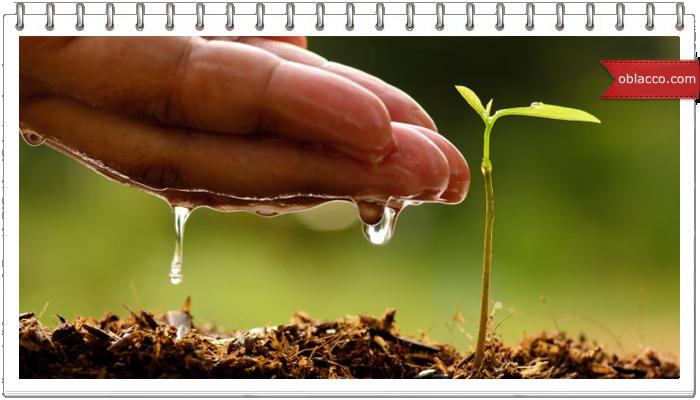 Посадка семян в кипяток, идеи для дачи