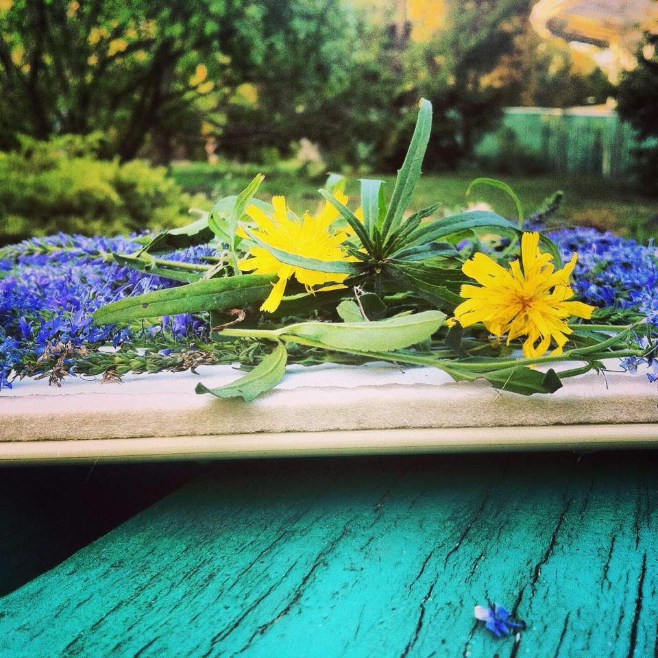 Прессованные цветы. Сушка растений в микроволновке