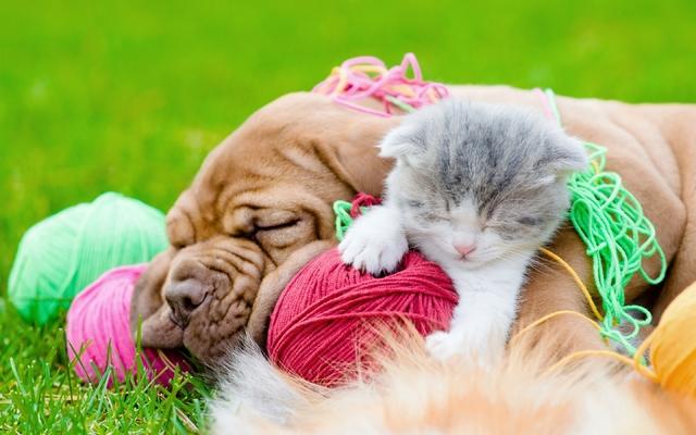 собака нитки кот