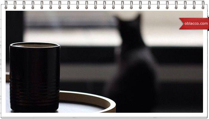 Кофе с котами от Натальи Бронниковой