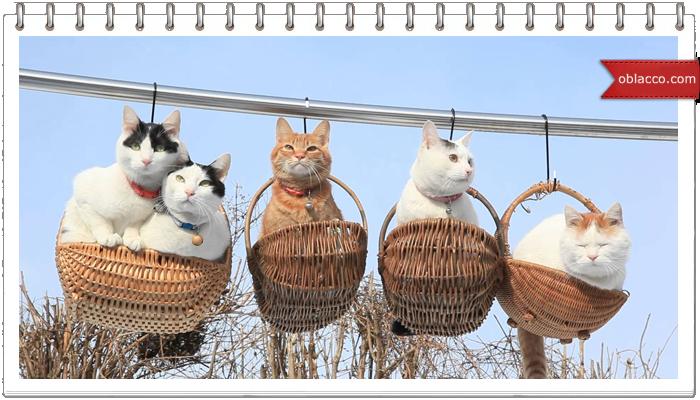 Пасхальные котики в корзине