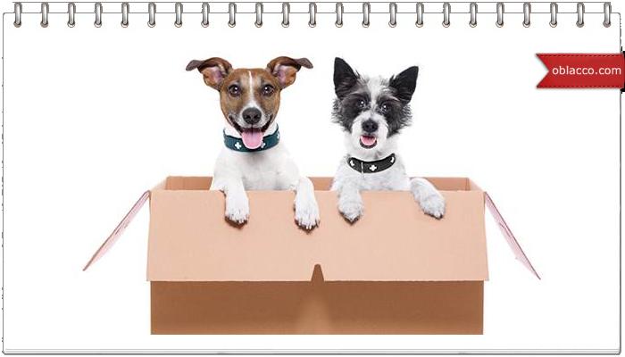 Petstory обширная база знаний про собак