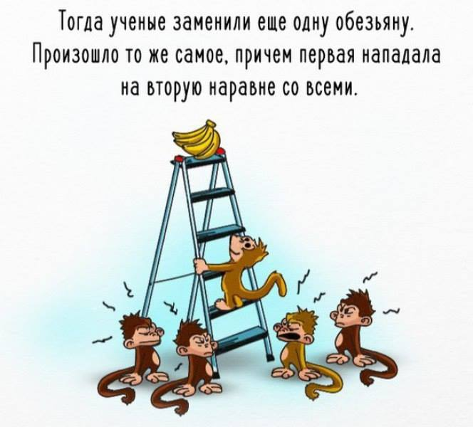 обезьяны эксперимент