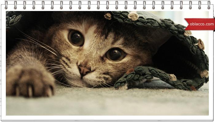 Кот использует свой хвост как пустышку