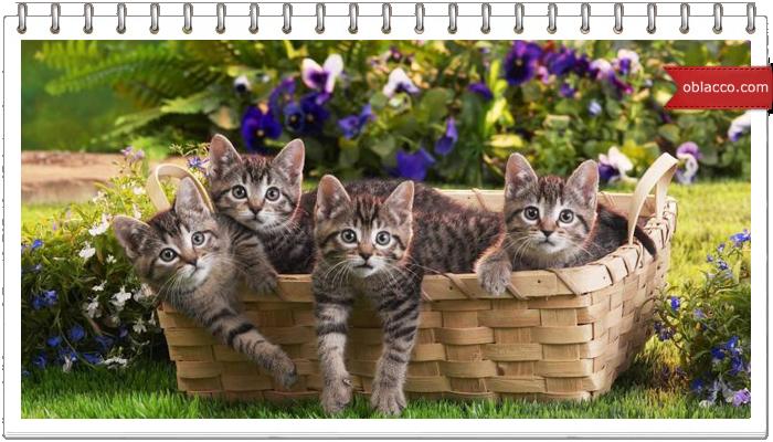 Весенние кошки