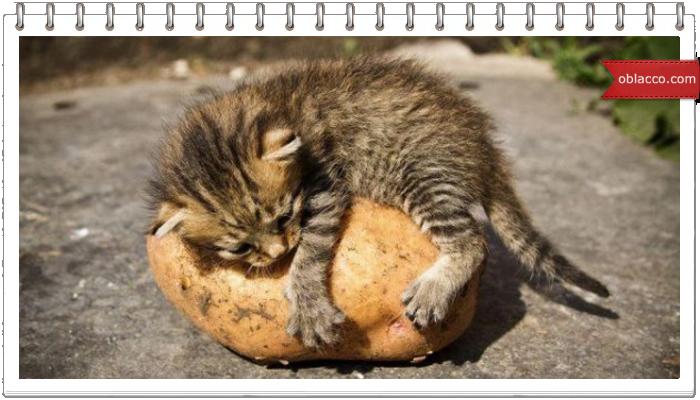 Отварите мне картошку
