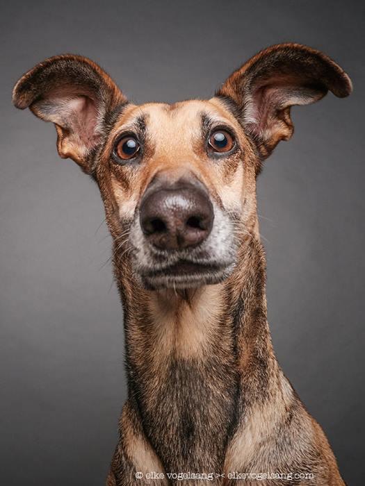 Сомневающиеся собаки