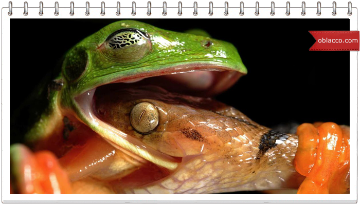 Кошка, змея и жаба