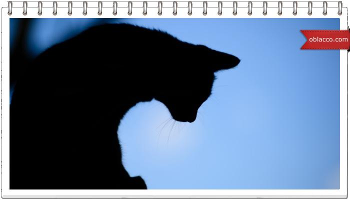 Кожаный кот. Брелок для ключей