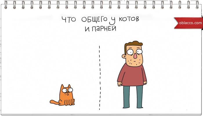 Что общего у котов и мужчин