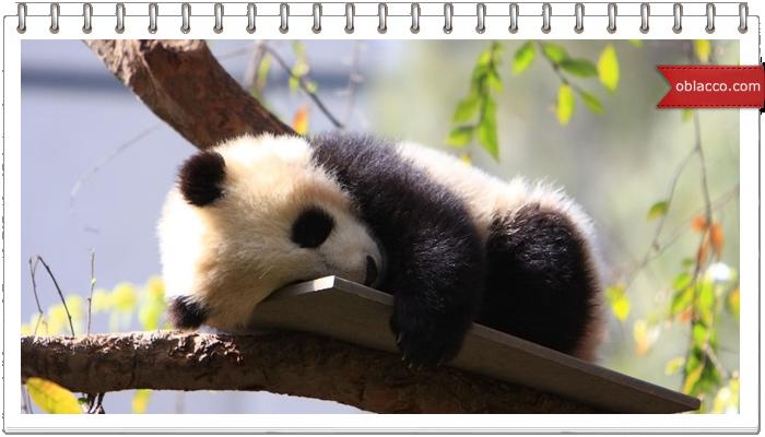 ПоПандос. Crazy panda