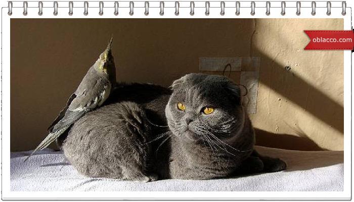 Попугай на птицемобиле