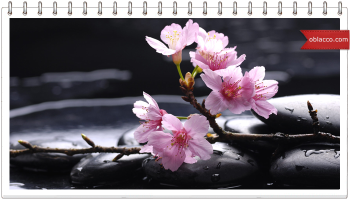 Цветок сакуры из газетных трубочек