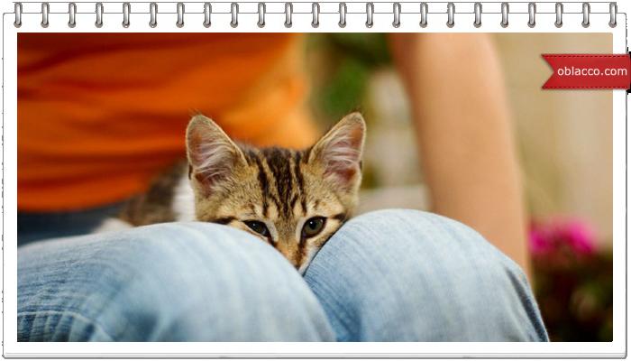 Спящая в ногах кошка - залог здоровья