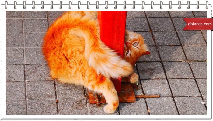 Кот - стриптизер