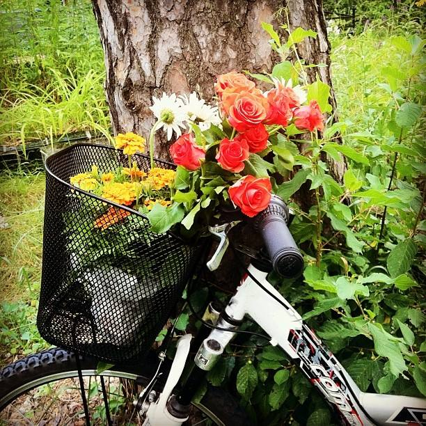 велосипед корзина цветы