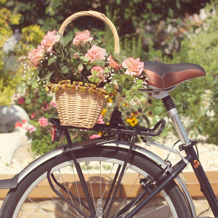 Южные кустарники цветущие фото