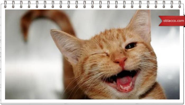 Кошки-ёжки