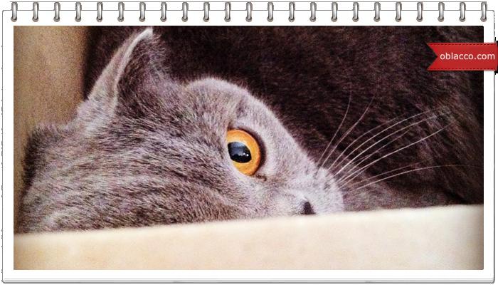 Кот, коробка, пылесос