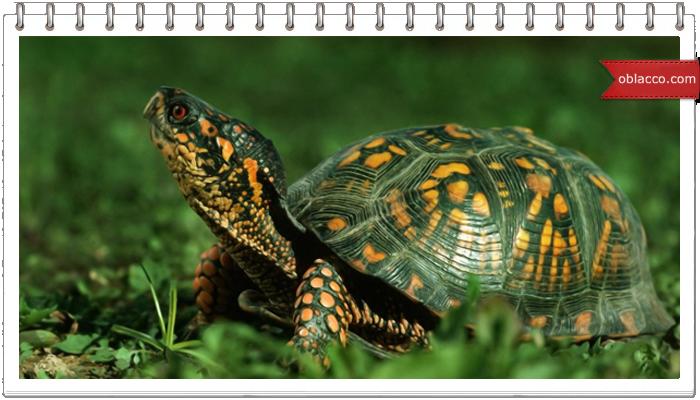 Как сплести черепаху