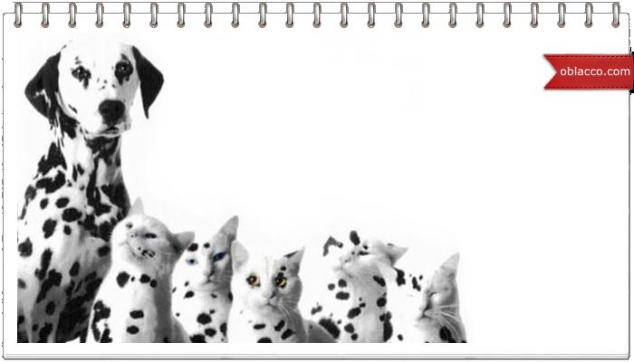 Семья далматинцев усыновила 5 котят