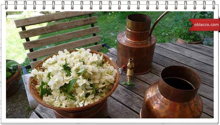 Гидролат цветов в домашнем уходе