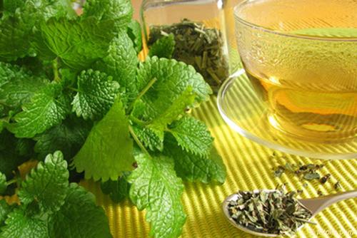зеленый чай с мелиссой для похудения