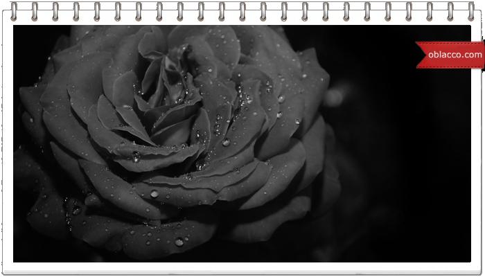 Черные цветы – гламур или траур?