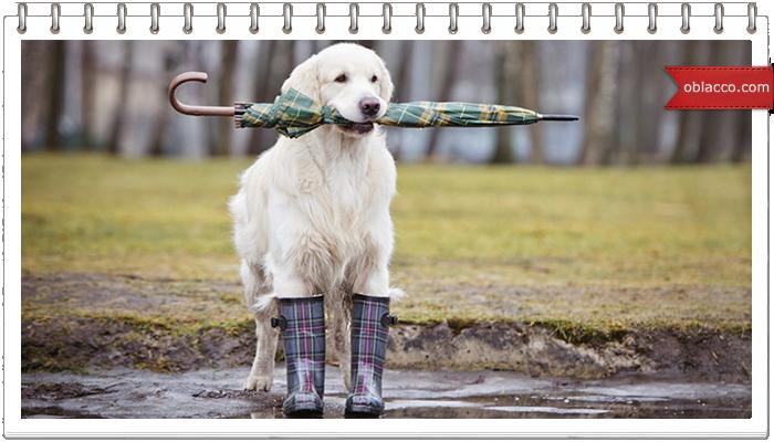 Лучшие собаки в непогоду