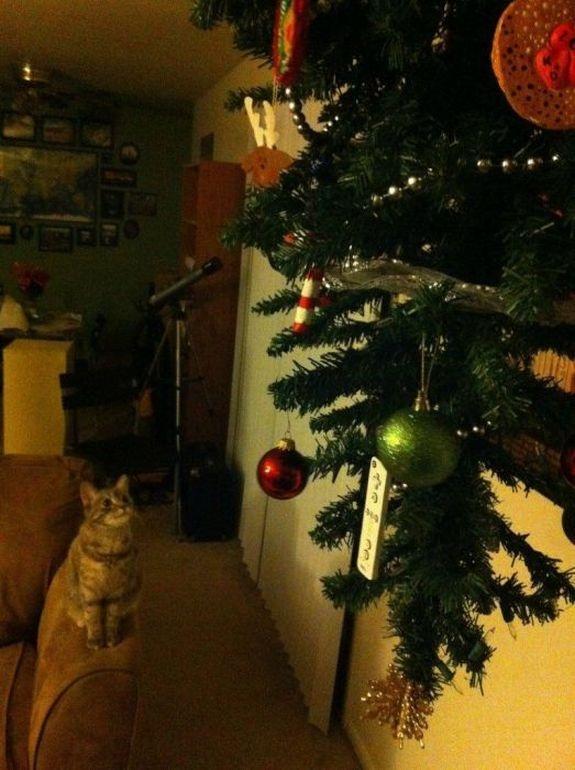 елки и коты