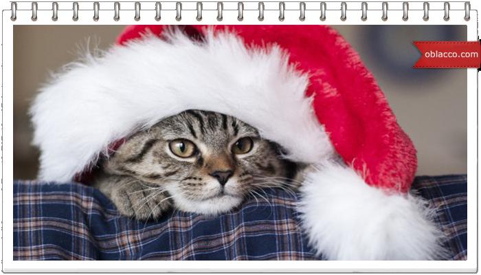 С Рождеством! Кот не отдает подарки)