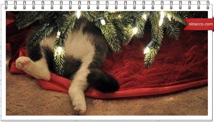 Как нарядить елку, если дома кошки и дети