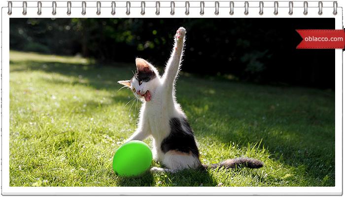 Как надолго занять общительного кота