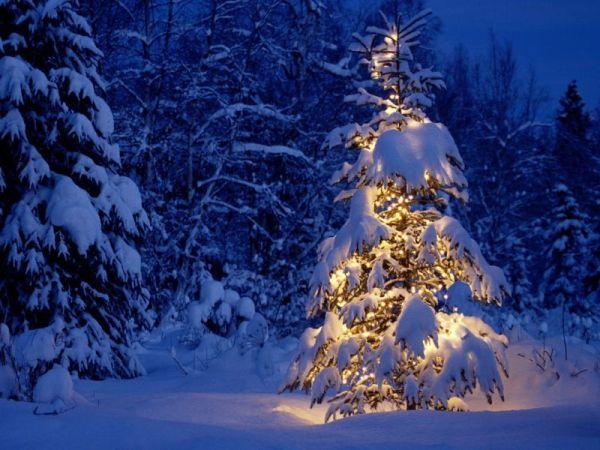 елка гирлянды огни новый год