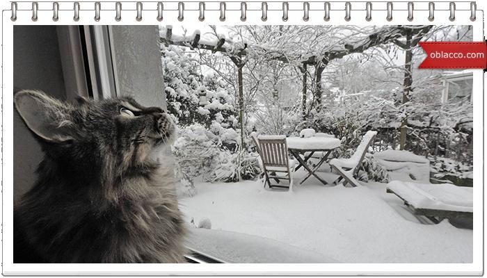 Снежколеп – ваш выбор хорошего зимнего досуга