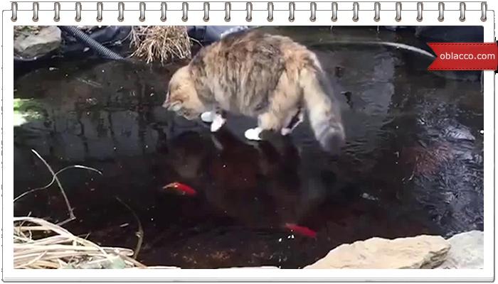 Зимняя рыбалка. Кот-рыболов