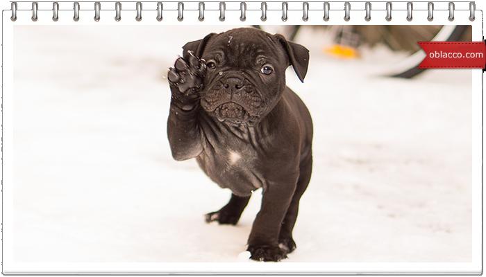 Настроение. Собака радуется снегу