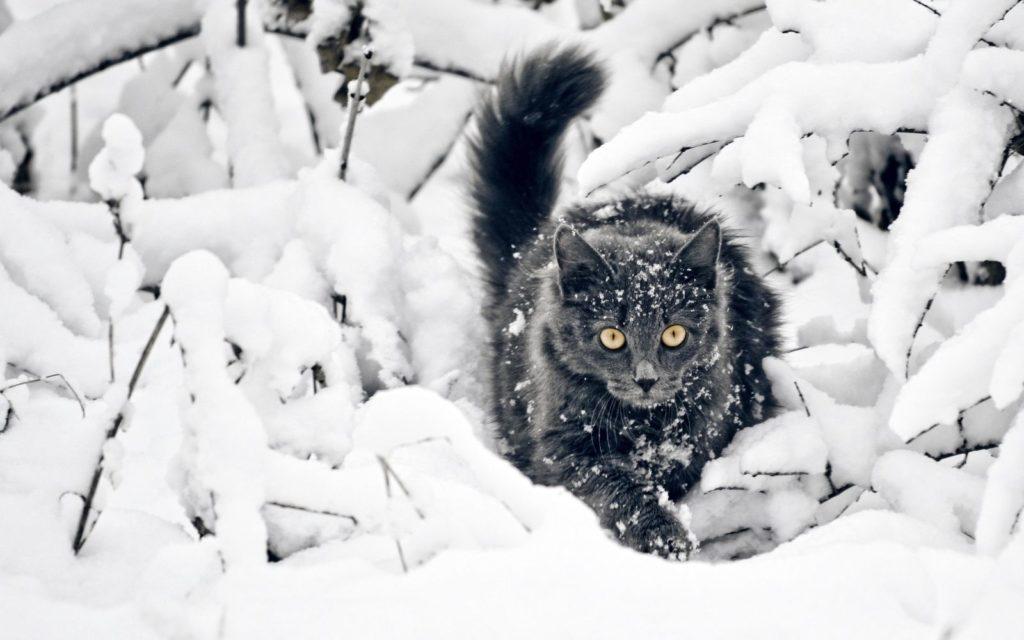 кот снег зима