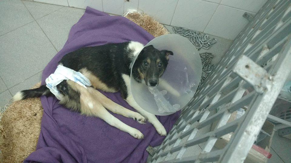 стен помощь животным киев собака