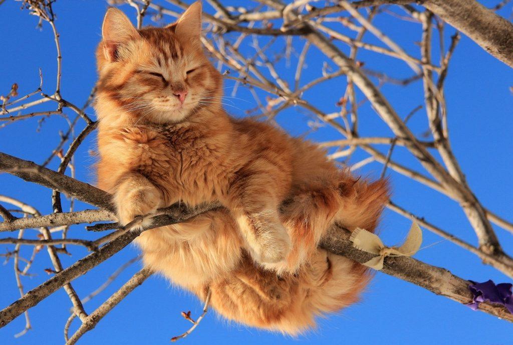 рыжий кот небо зима