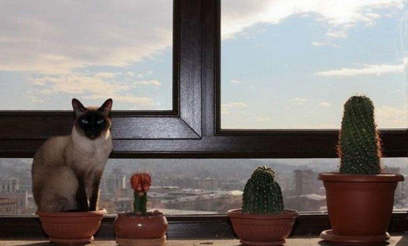 кошки кактусы