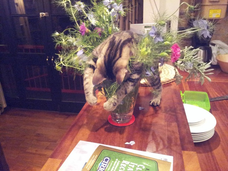 кошка ваза цветы