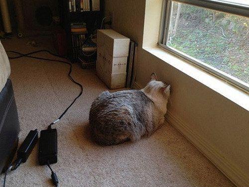 кошка окно