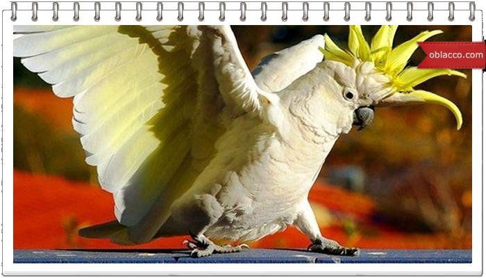 Смешной попугай лает как собака