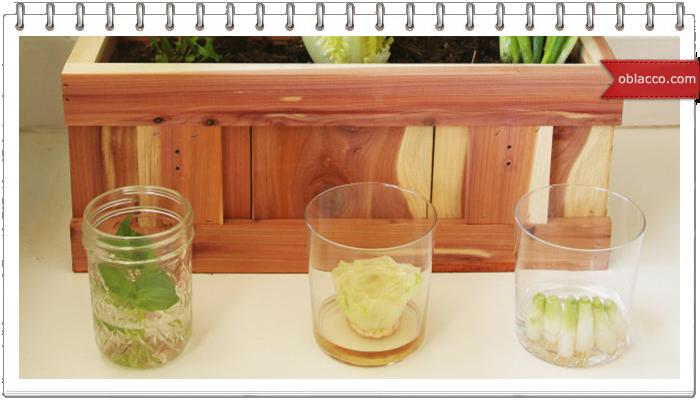 Как вырастить остатки овощей. Огород на подоконнике
