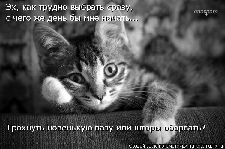 кошки приколы
