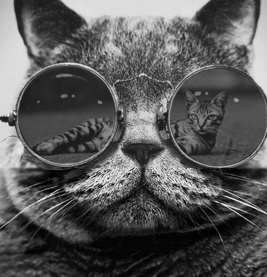 кот очки