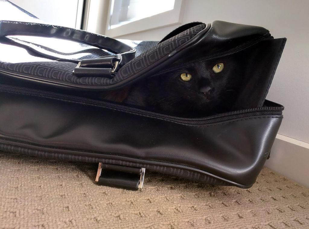 черный кот чемодан