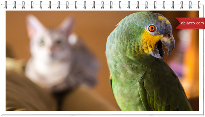 Попугай жако против кошки: кто кого