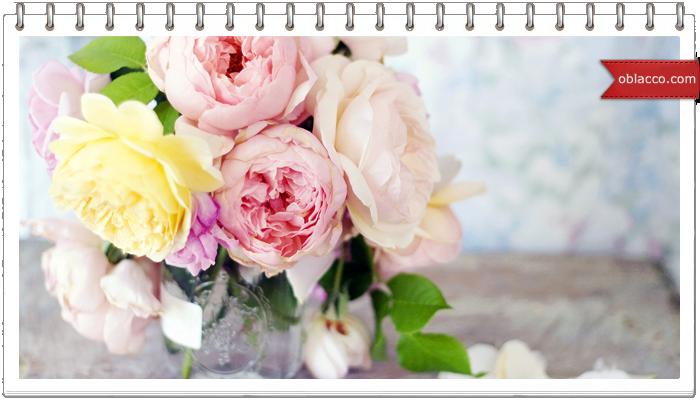 Пионы – самые нежные цветы для девушки